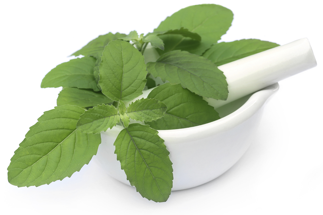 Benefits of Basil in Ear pain